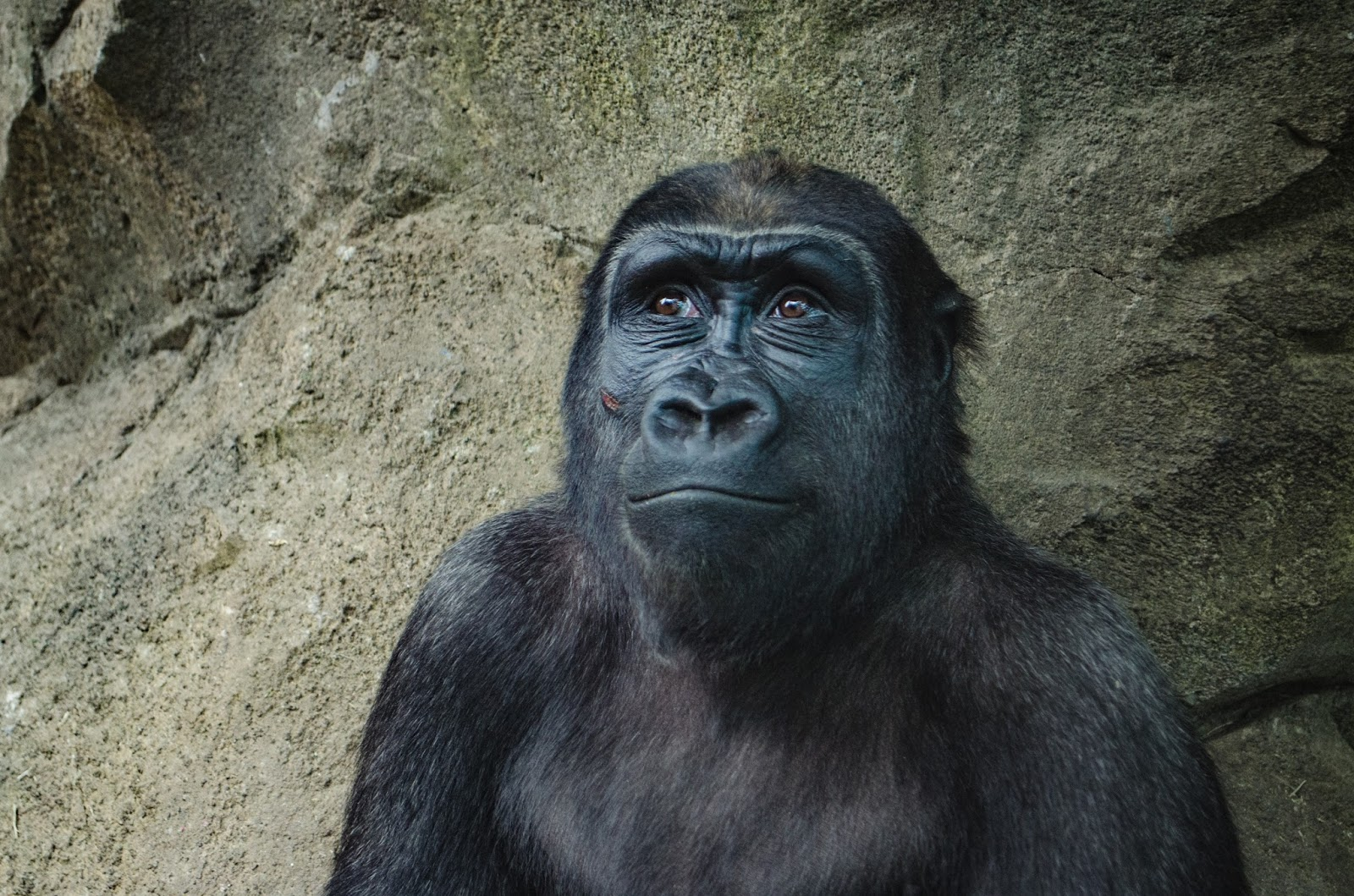The Death of a Gorilla and the Lesson We Aren't Learning